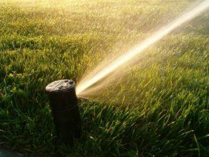 a sprinkler head spraying water